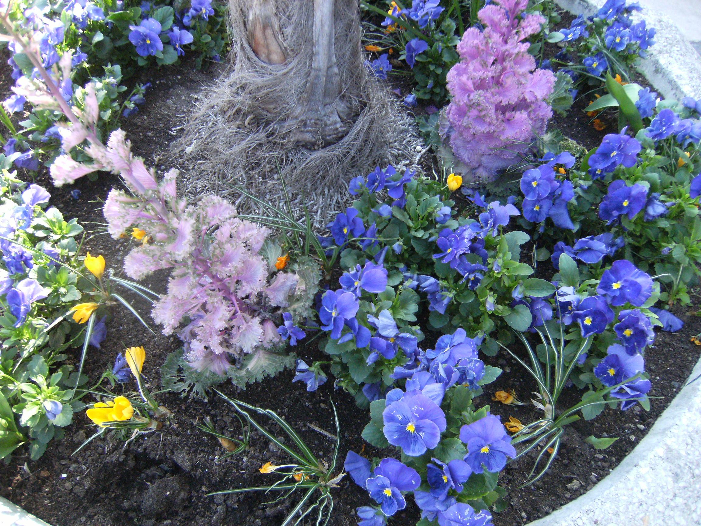 avignon-mars-2011-072.jpg