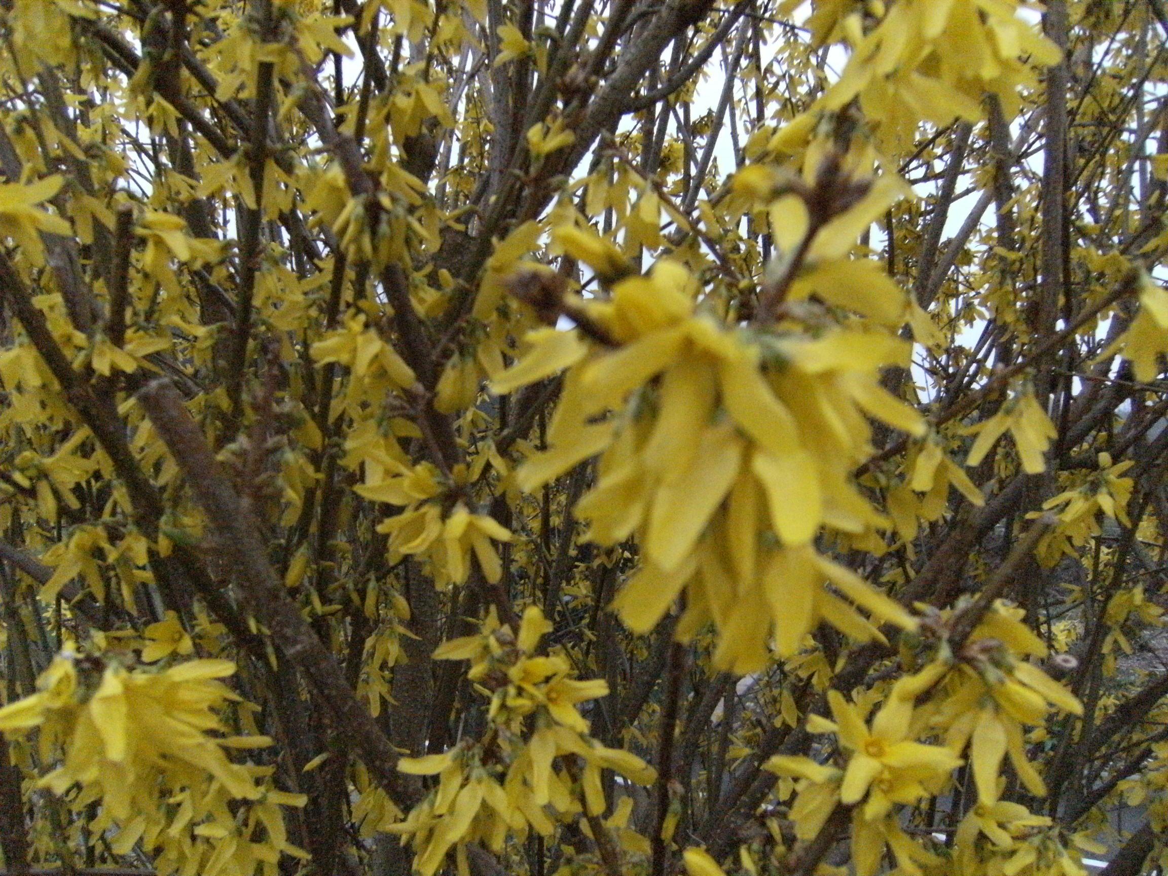 printemps-028.jpg
