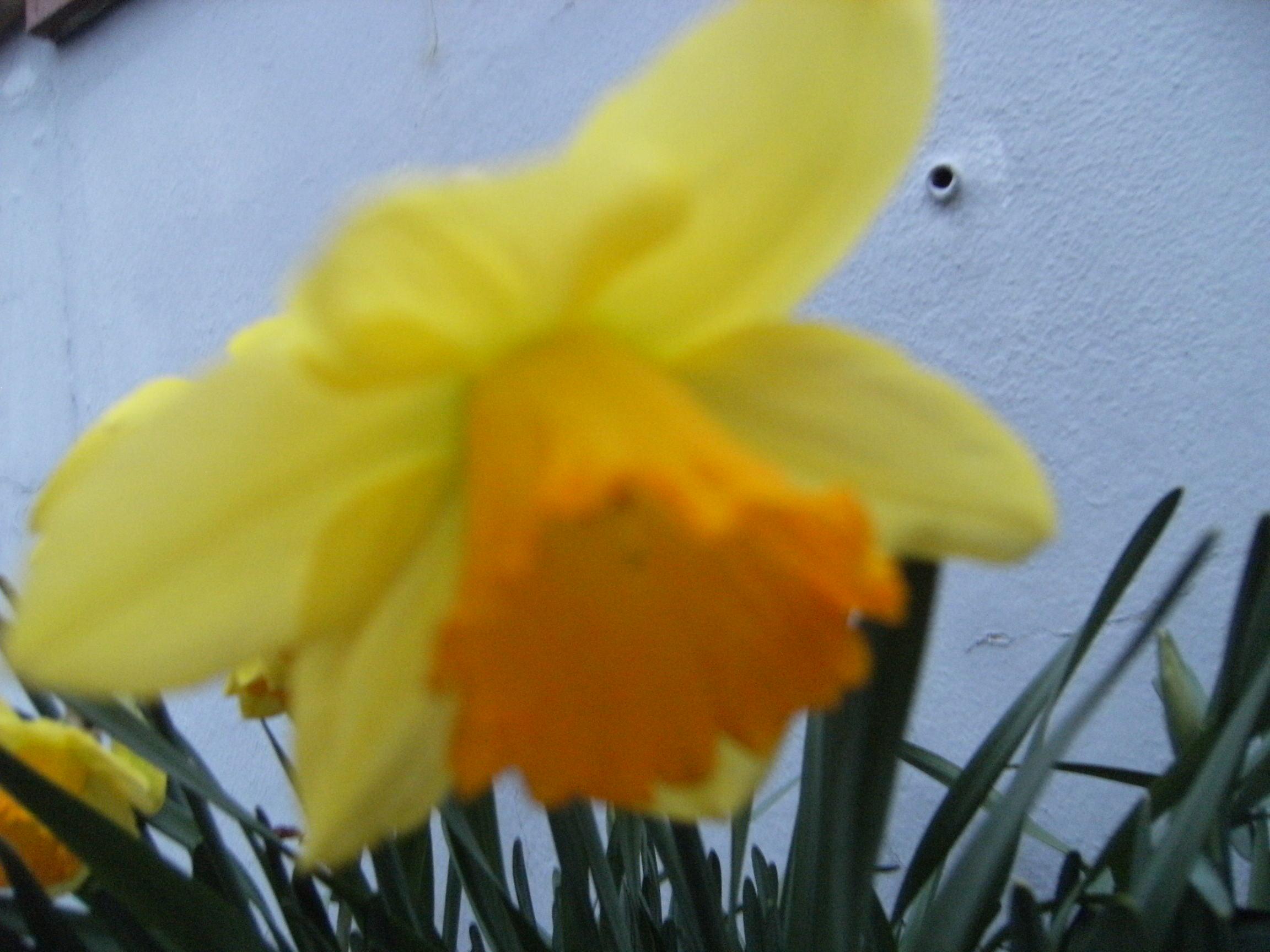 printemps-034.jpg