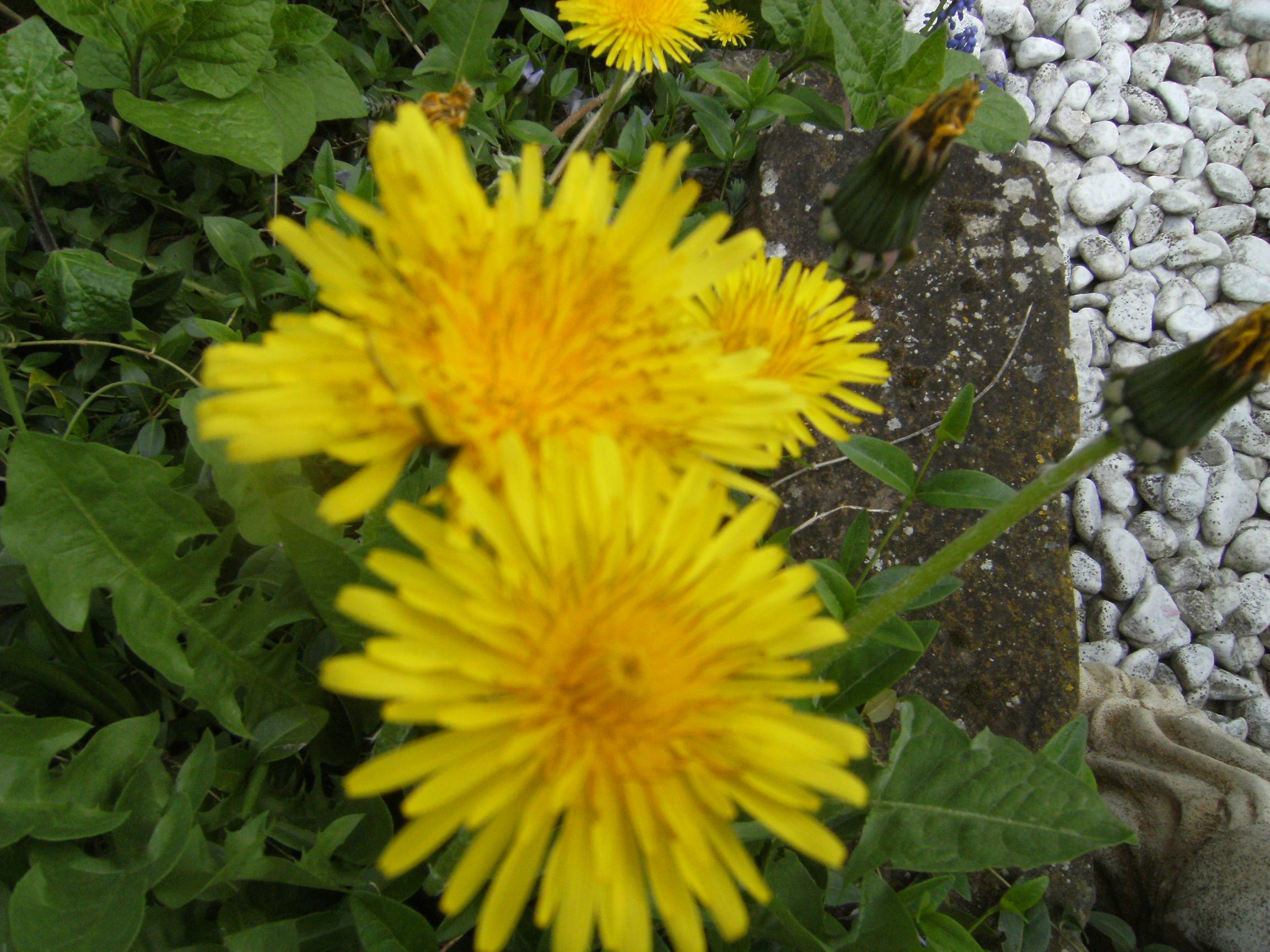 fleurs-001.jpg