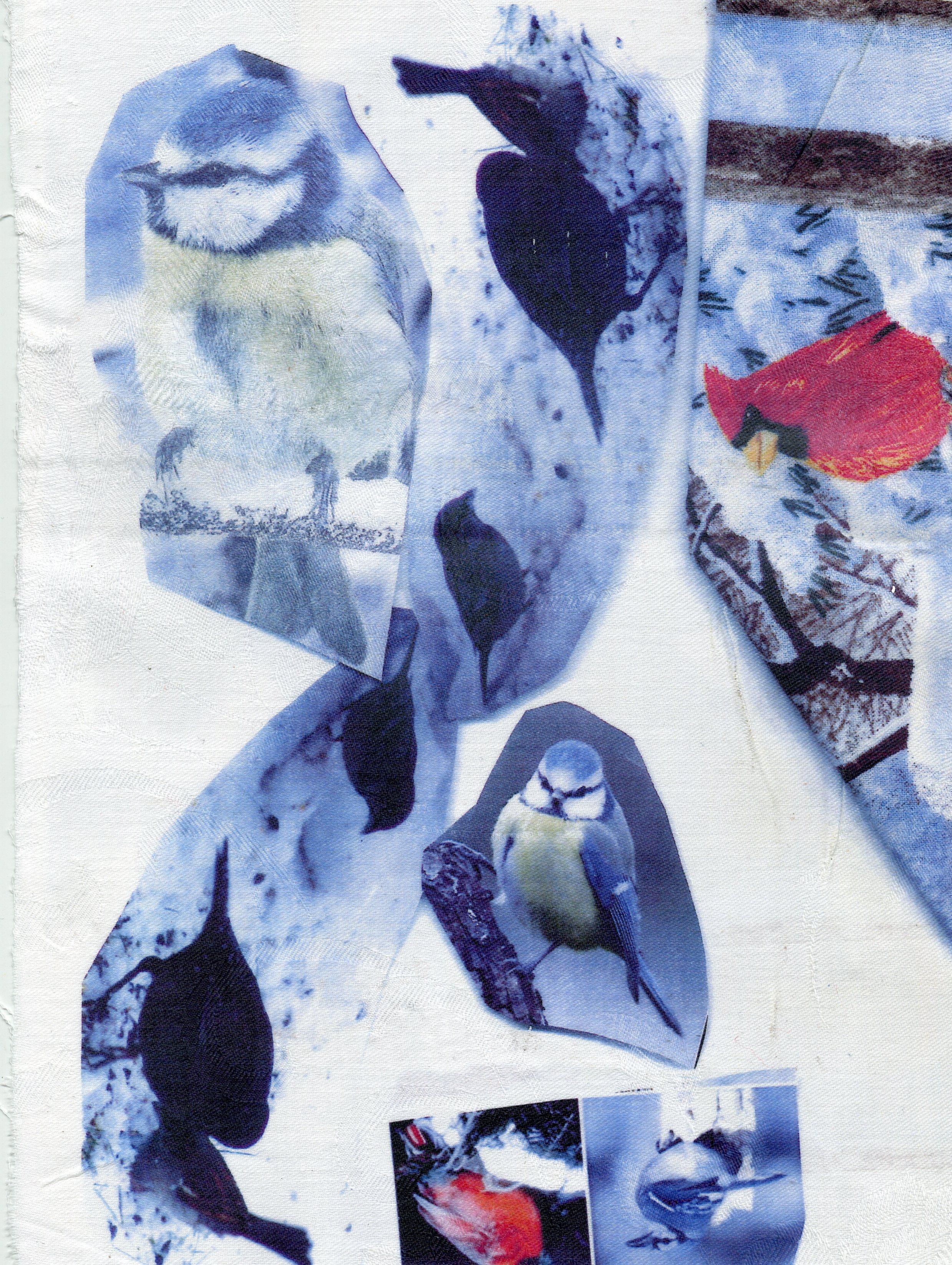 oiseaux-33139.jpg